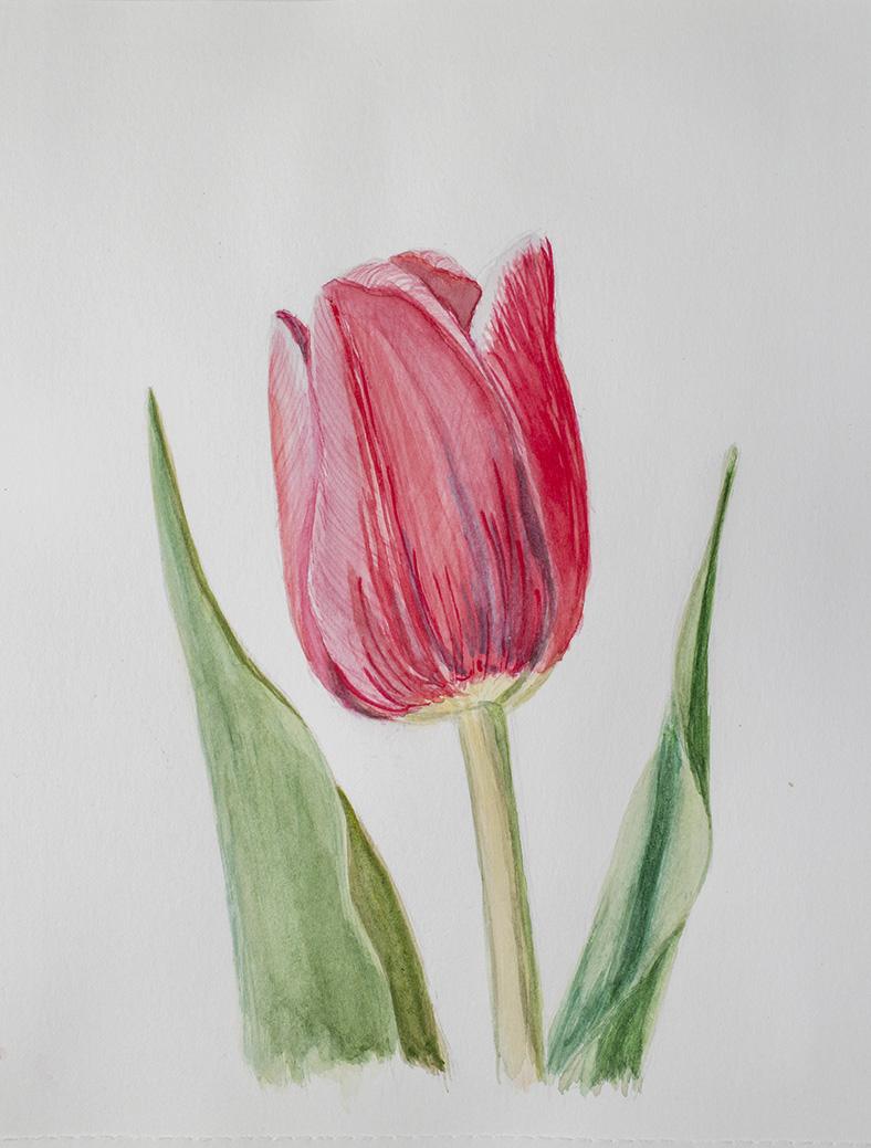 Марафон Весенняя нежность Тюльпан 2