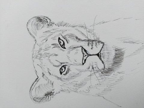 мир диких кошек лев