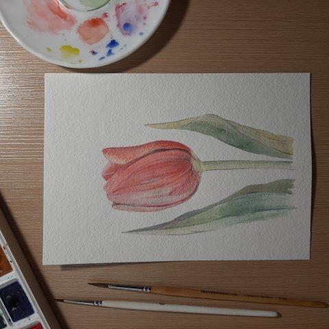 Первый урок. Тюльпан