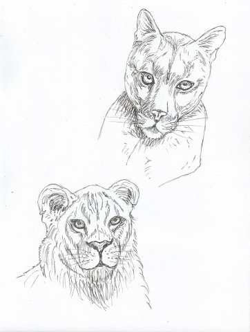 Пума и львица